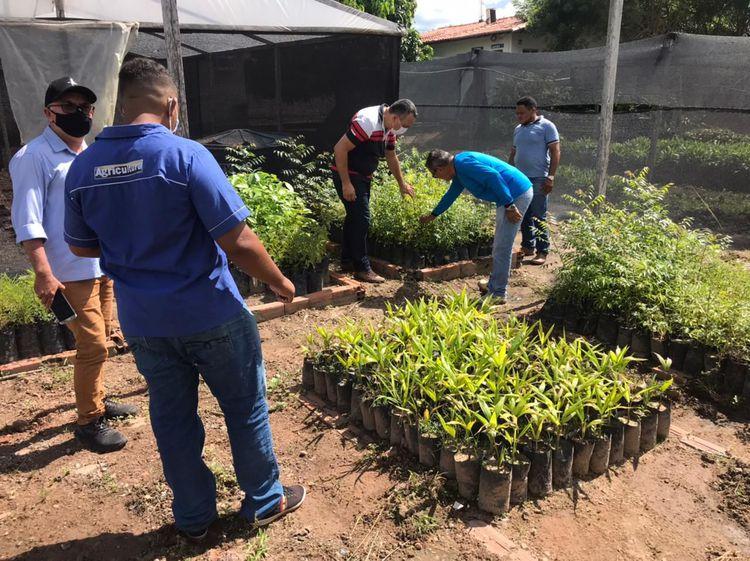 Secretaria de Agricultura distribui mudas de árvores frutíferas e plantas