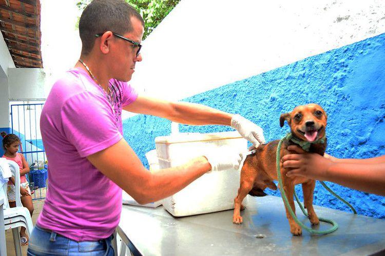 Mais de 30 mil animais já foram imunizados pela Prefeitura
