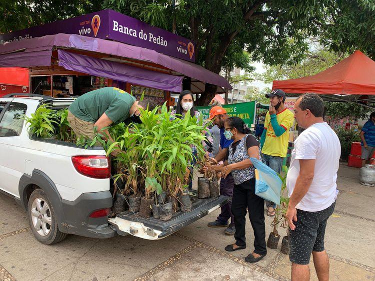 População recebe mudas de árvores durante ação ambiental na Praça Brasil